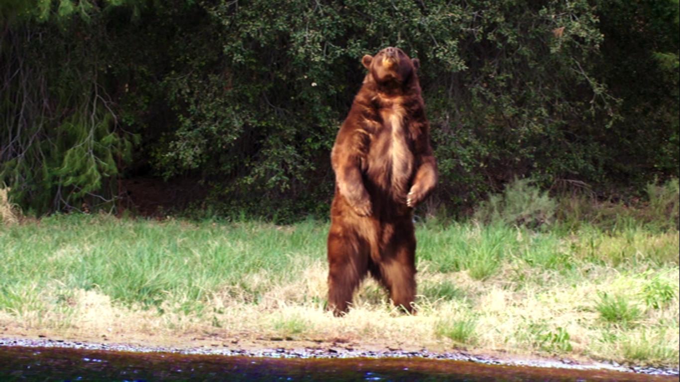 Zombeavers - Bear