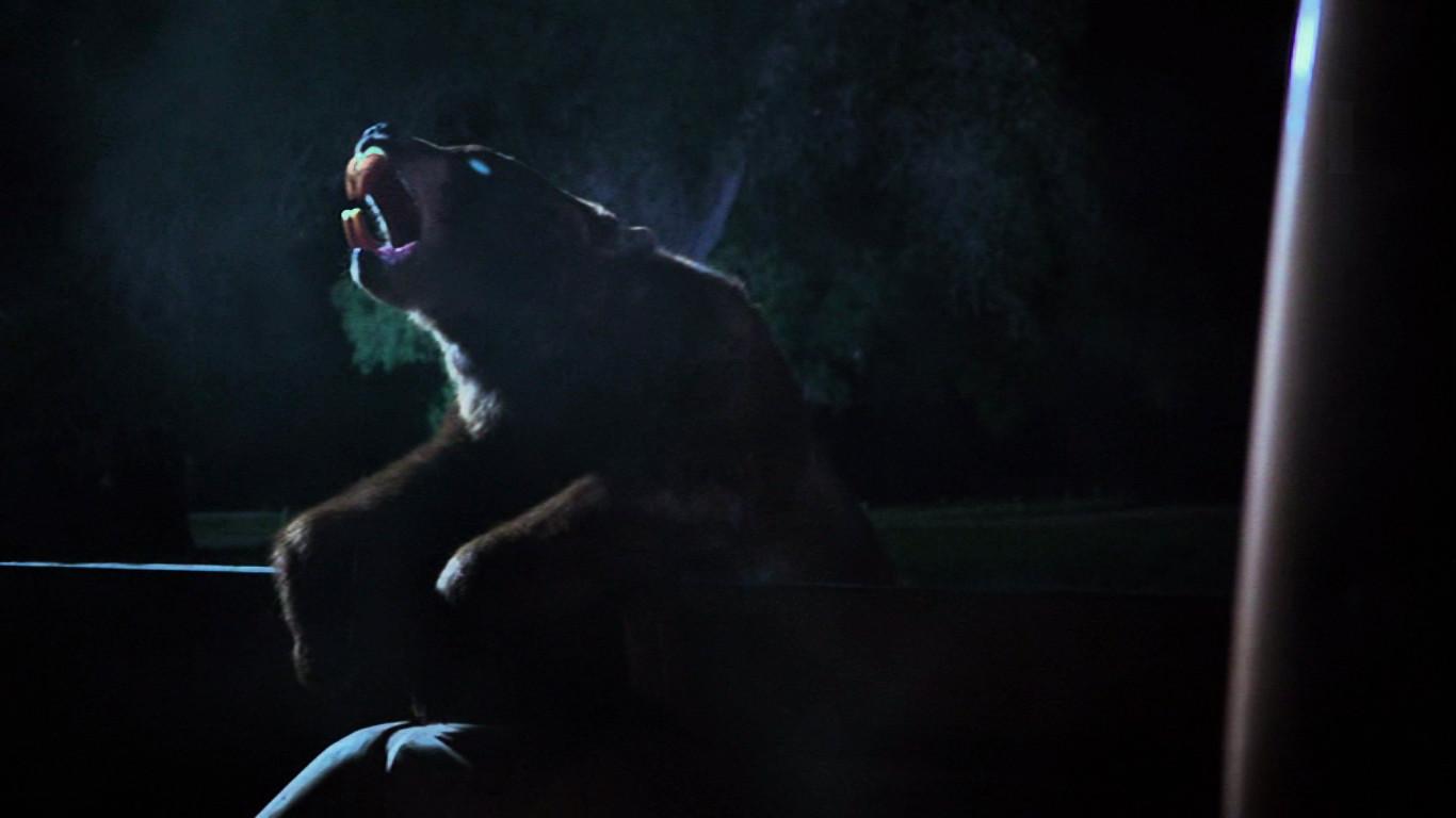 Zombeavers - Zombie Bear